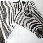 Zebra by kellysp