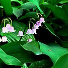 Lily-of-the-Valley by Douglas E.  Welch