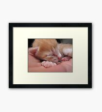 6 days old Framed Print