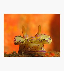 Halifax Nudibranch Photographic Print