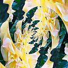 Rose. by Bo Jones