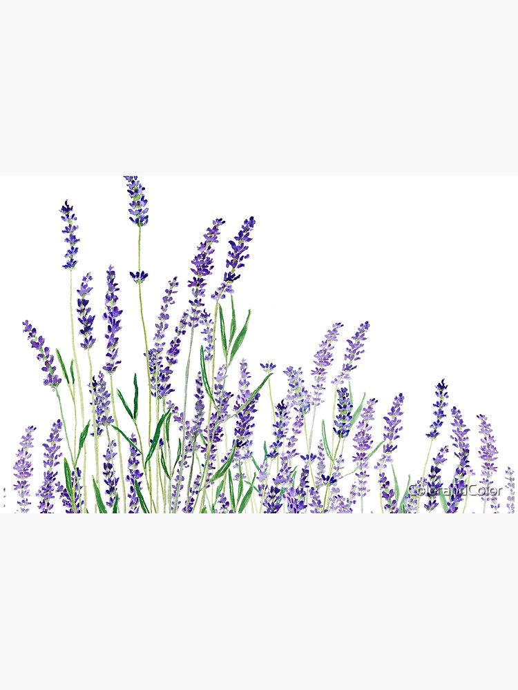 purple lavender horizontal watercolor by ColorandColor