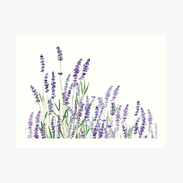 purple lavender horizontal watercolor Art Print