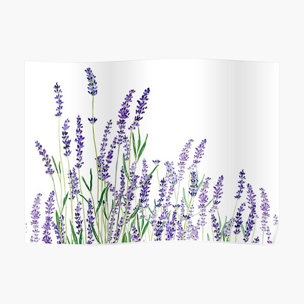 purple lavender horizontal watercolor Poster