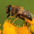 Wanna Bee by Robert Abraham