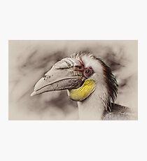 Hornbill Photographic Print