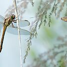 Summertime Friends by Bonnie T.  Barry