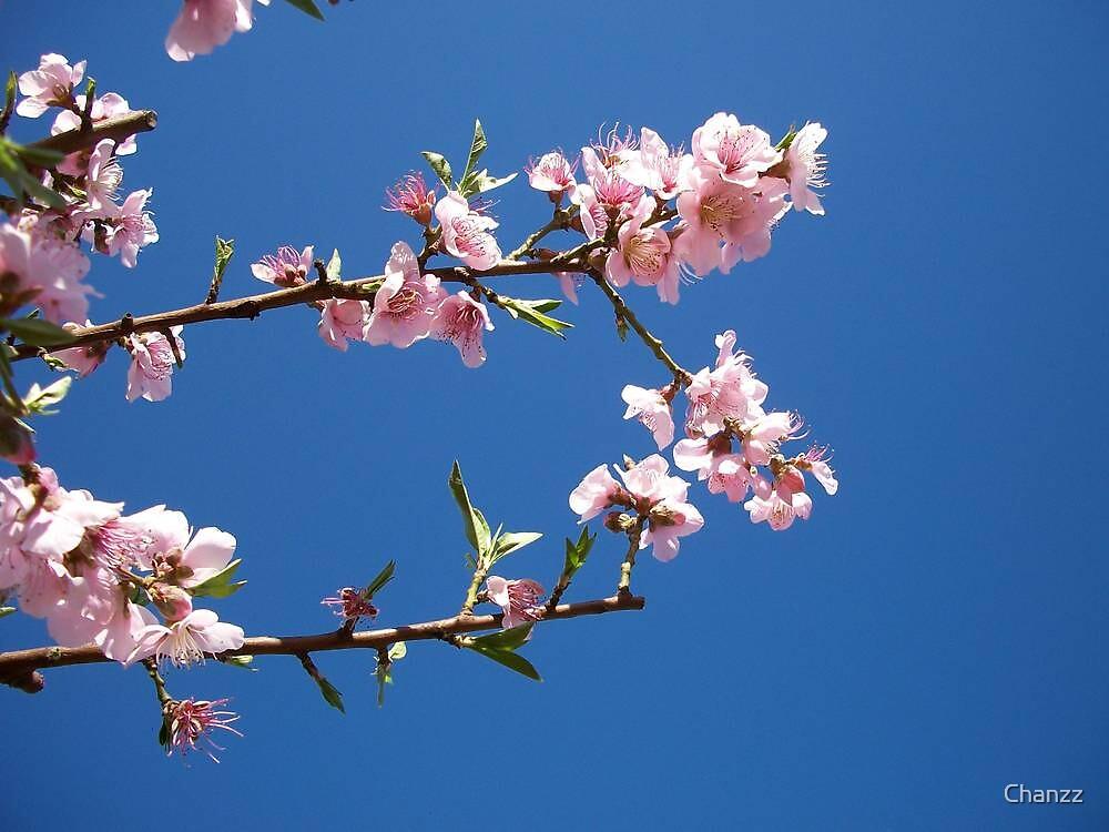 Simplistic Blossom by Chanzz