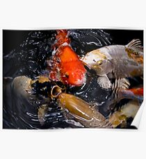 koi karp fish Poster