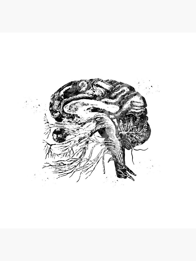Brain cranial nerves by erzebetth