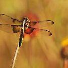Dragon Wings in the Flower Patch by Kenneth Haley