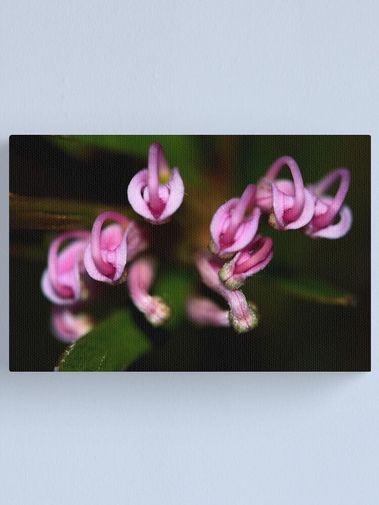 Alternate view of Grevillea humilis subsp. humilis Canvas Print