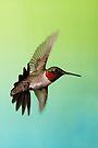 Ruby Throated Hummingbird by WorldDesign