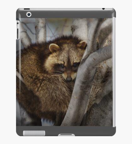 Raccoon in Tree iPad Case/Skin