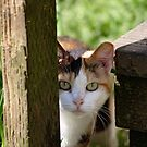 Calico Feral Cat At Feeding by Chriss Pagani