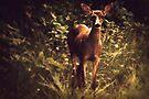 Deer by Joshua Greiner