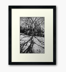 Shadow Roots Framed Print