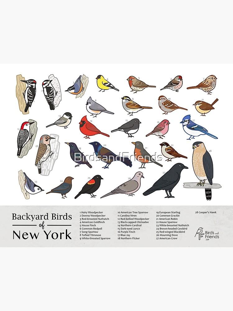 """New York - Backyard Birds of New York Field Guide Print ..."