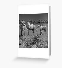 Camargue Horses Greeting Card