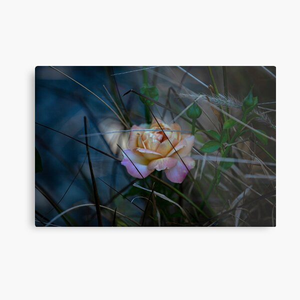 not just another rose Metal Print