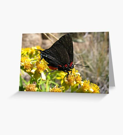 Butterfly ~ Great Blue/Purple Hairstreak (Male) Greeting Card