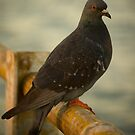 Bird on the pier by Scarlet