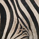 Zebra Stripes by naturalnomad