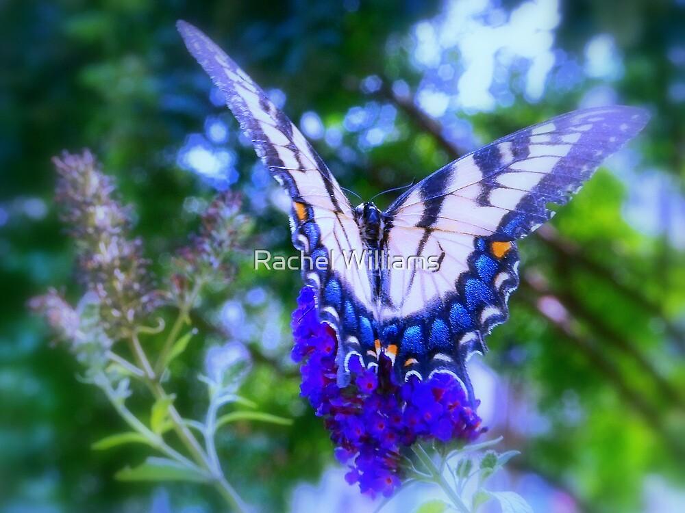 Majestic by Rachel Williams