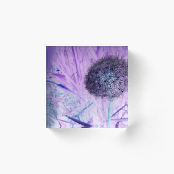 Make a wish dandelion Acrylic Block