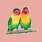 Fischer's lovebirds by savousepate