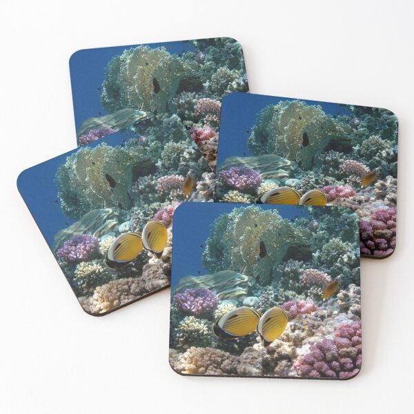 Red Sea Exquisite Butterflyfish And Colorful Corals Coasters (Set of 4)