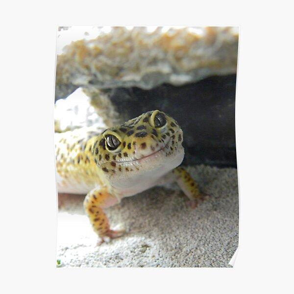 Gecko Smile Poster