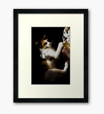 Easily Amused - Jasper Framed Print