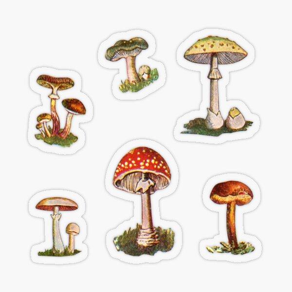 Mushrooms Transparent Sticker