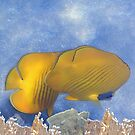 The Yellow Masked Butterflyfish And White Corals by hurmerinta