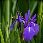 «Sólo zumbando a lo largo de recoger el polen» de Loopy-Lou