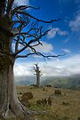 Mighty Totara. by Michael Treloar