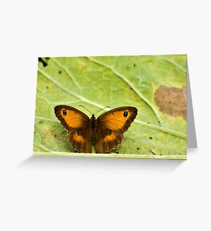 Gatekeeper Butterfly Greeting Card