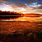 Chestnut Hill, MA by LudaNayvelt