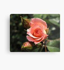 Orange Rose and Buds Metal Print