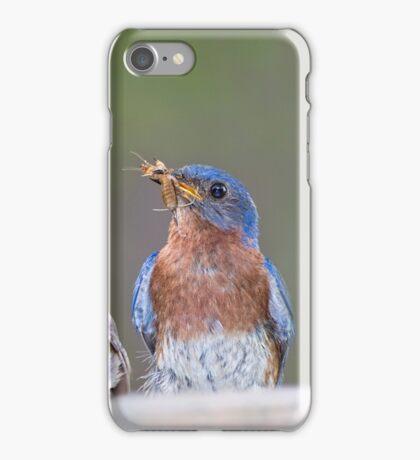 Eastern Bluebird Family iPhone Case/Skin