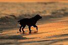 Sunset Dog by WorldDesign