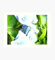 rhodedendron Art Print