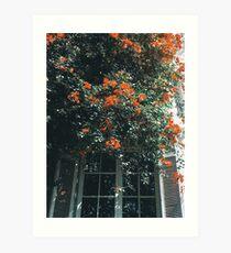 Flowers Lámina artística