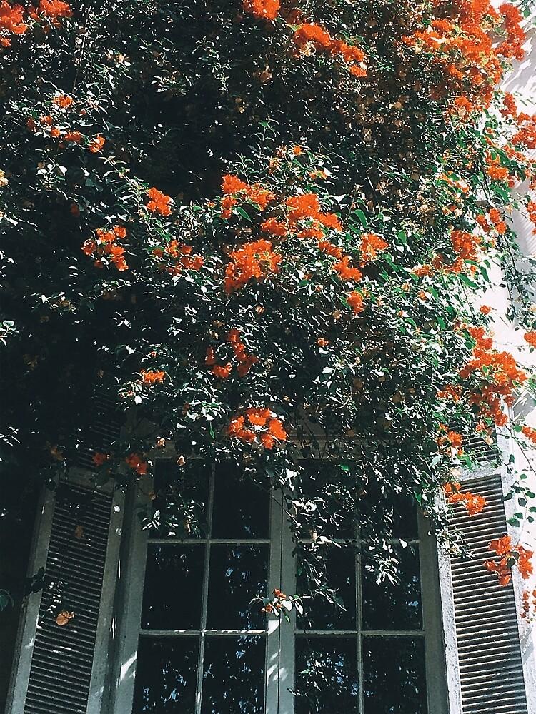 «Flowers» de Maria-Paz
