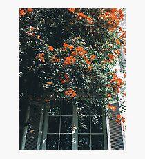 Flowers Lámina fotográfica