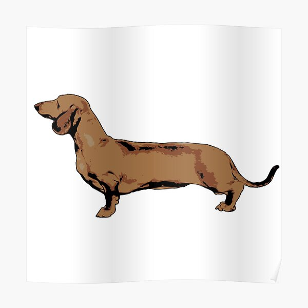 Red Smooth Haired Dachshund Poster