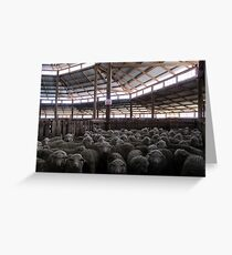 The Holding Pen - Deeargee Woolshed, Northern Tablelands, NSW, Australia Greeting Card