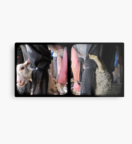 Click Go The Shears - TTV Diptych Metal Print