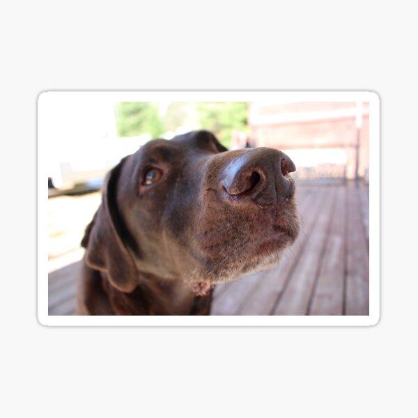 Animals: A Doggo's Snout Sticker